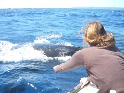 close to Whale