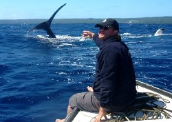 swimming with whales Tonga