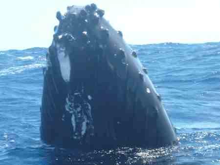 Whale head